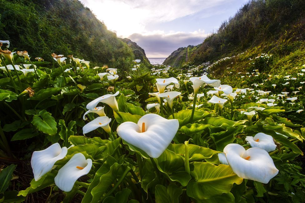 International Garden Photographer of the Year 2015: чемпионы определены