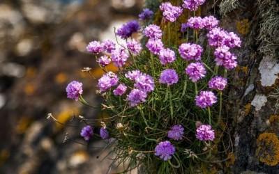 Растения, подходящие для альпийской горки (фото и названия)