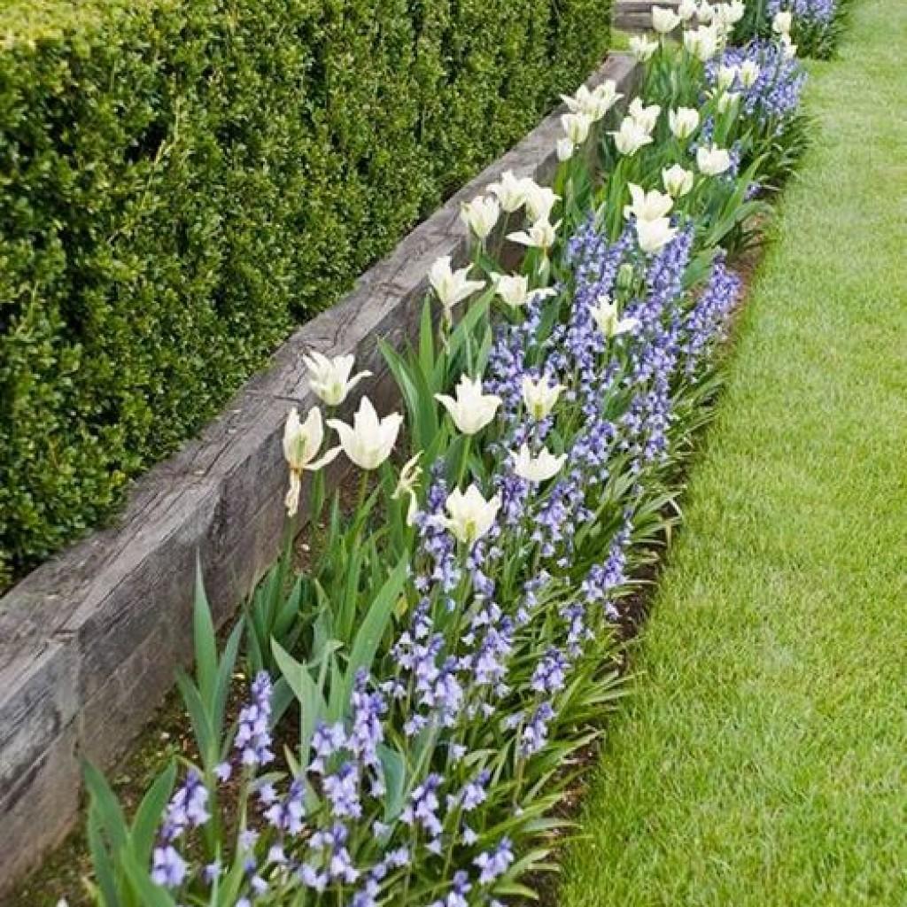 Клумбы из тюльпанов: организация и уход